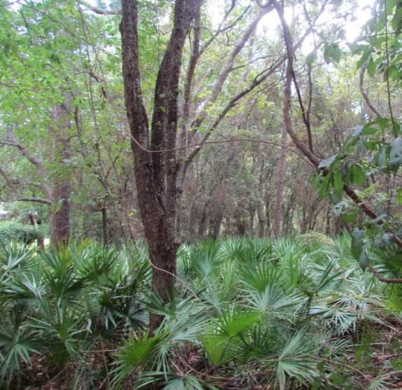 12577 Prospero Dr, Pensacola, FL 32507