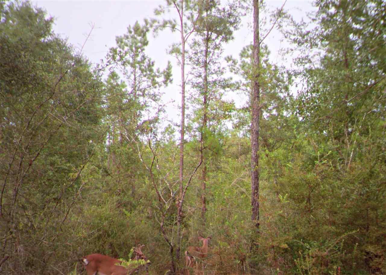Vacantland Hidden Forest Trail, Pace, FL 32571