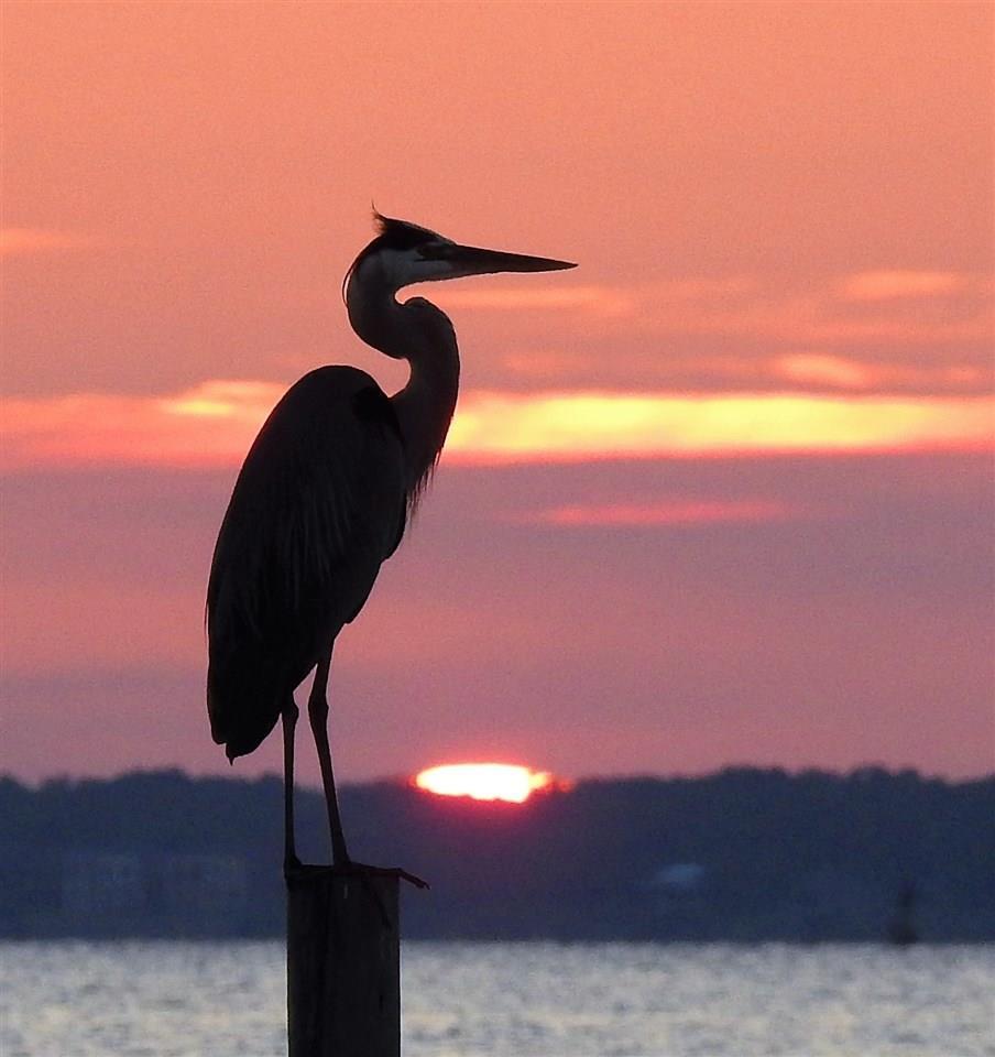 518 Navy Cove Blvd, Gulf Breeze, FL 32561