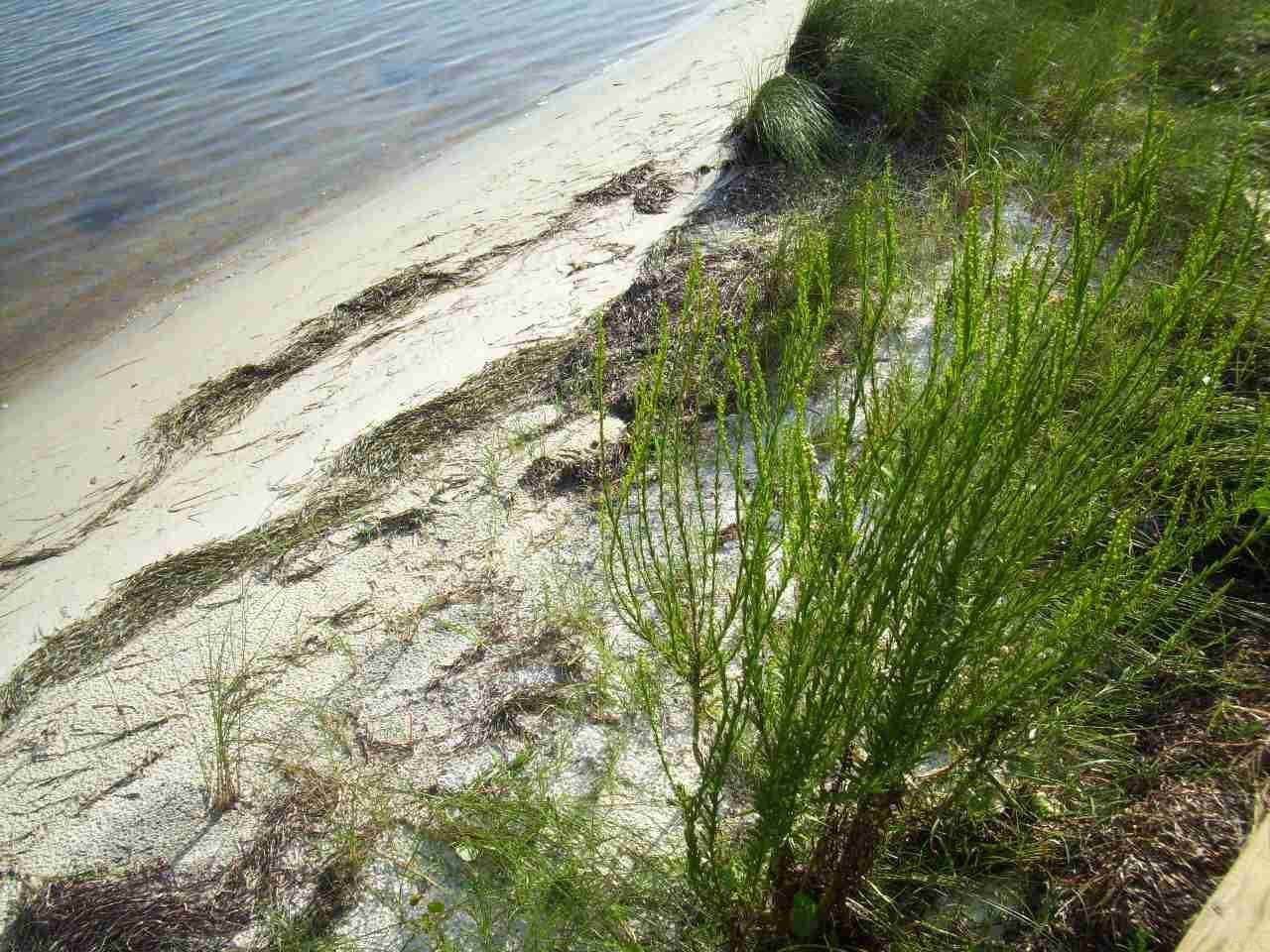 Soundside Dr, Gulf Breeze, FL 32563